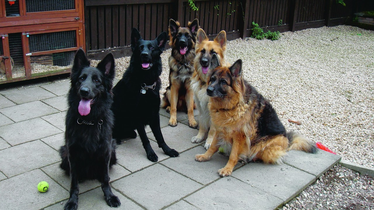 Blue, Kai, Faolan, Teghan and Mishka all live with Gary and Lesleigh Glass in Inverness.