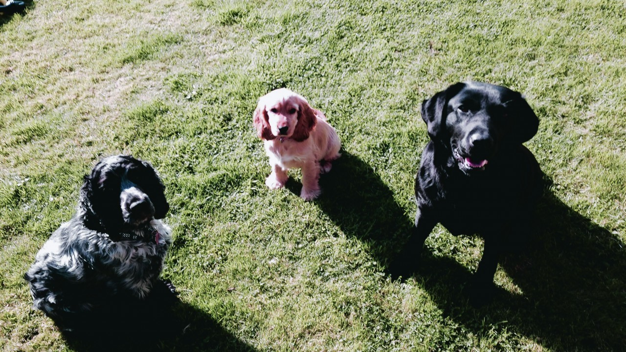 Here are Mackie, Minnie and Bella waiting for a treat. They live with Brian Campbell of Tillyfourie, Inverurie.