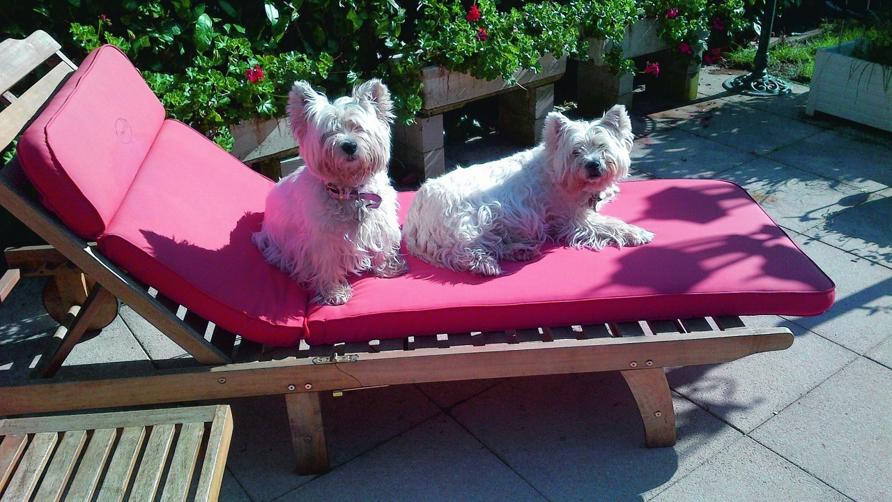 Cailaig and Sally were born in Cullen, Banffshire in Scotland and they now live in Geneva Switzerland.  Since this photograph was taken they have had their summer haircuts as they found sunbathing a bit hot and sharing the same lounger a bit difficult. They live with the Mackay family.