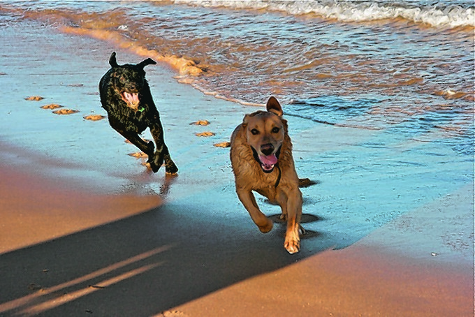 Jaeger and Mickey on Scotstown Beach, St Fergus. They live with Susan Masson.