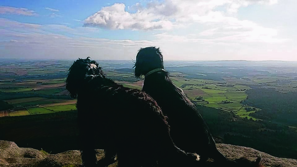 Maggie and Bowdie enjoying the view at the top of Bennachie. They stay with the Thomson family at Turriff.