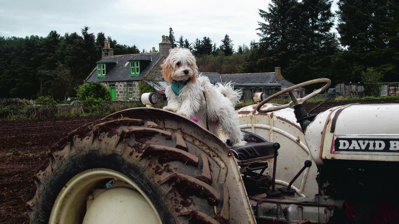 Mia the five-month-old cavachon puppy lives with Brian Mutch and Olivia Sim in Thurso.