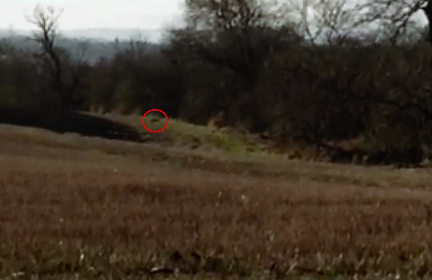 A large black cat was spotted in a field on the outskirts of East Lothian
