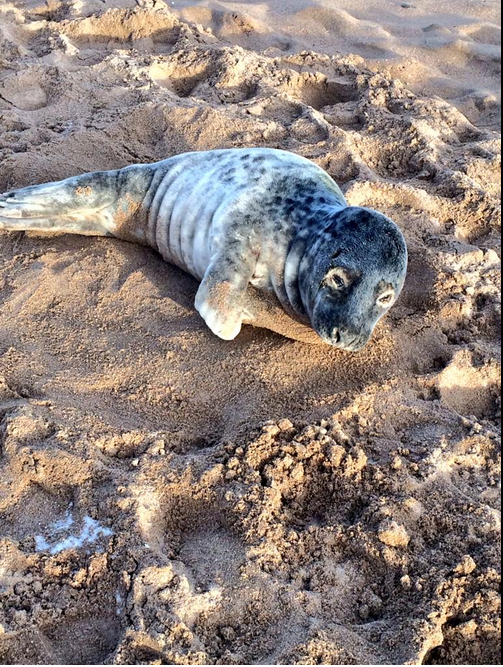 This poor seal was just trying to catch some ZZZs. Photograph courtesy of Cheryl Rogerson