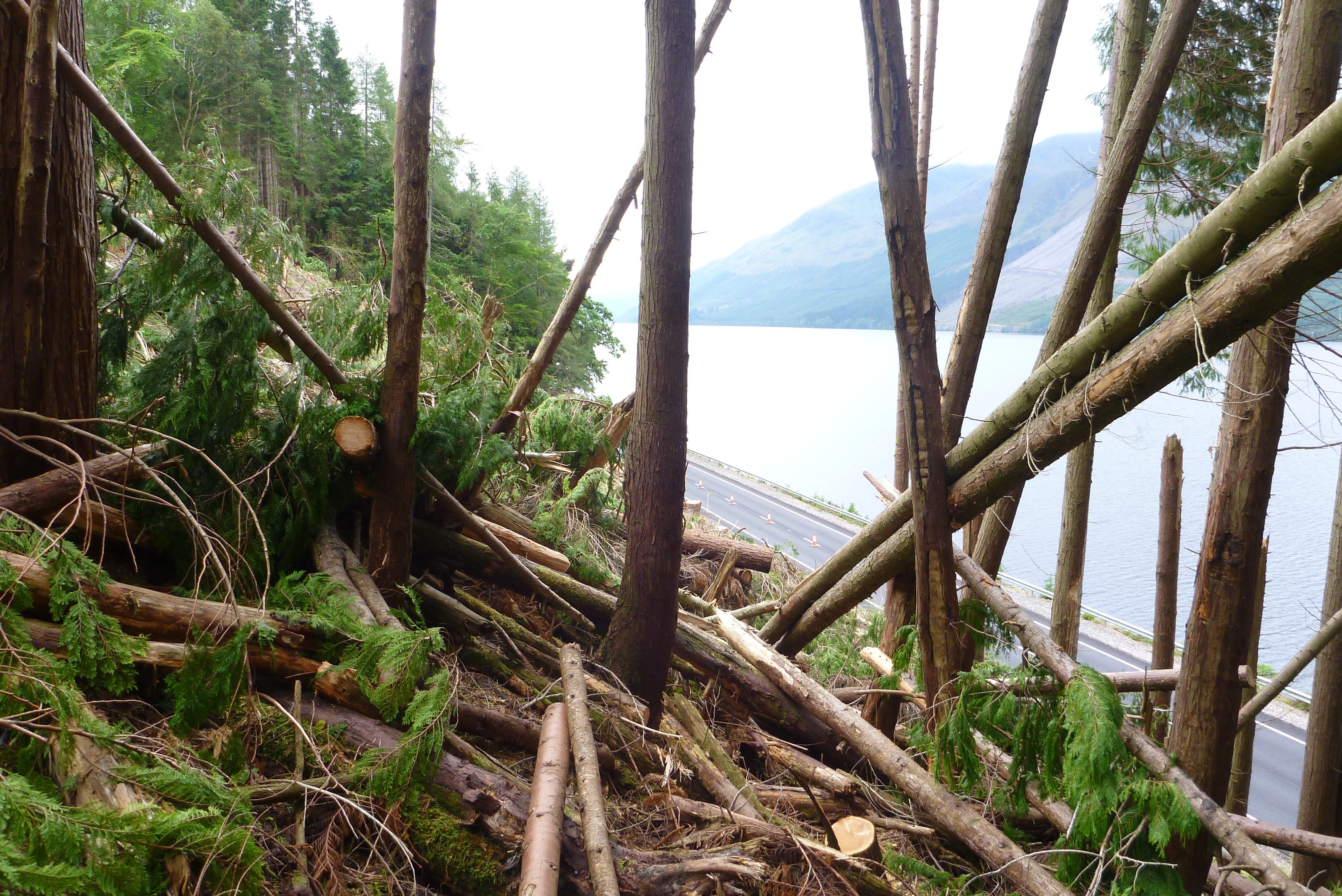 Next phase of tree felling operations above A82 to start in September