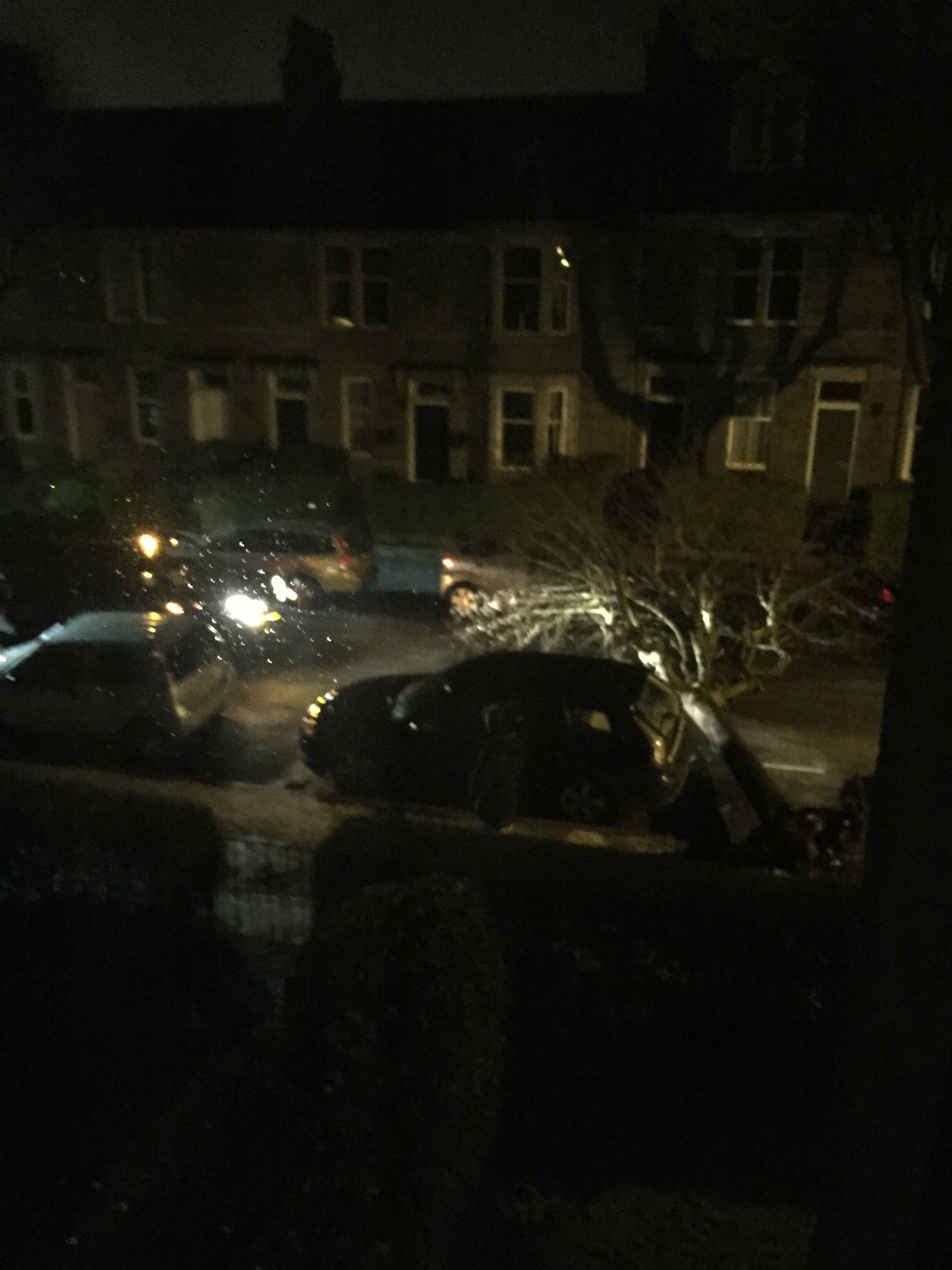 The tree after it fell onto a car parked nearby