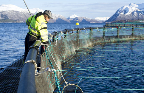 A salmon farmer at one of Marine Harvest's sites.