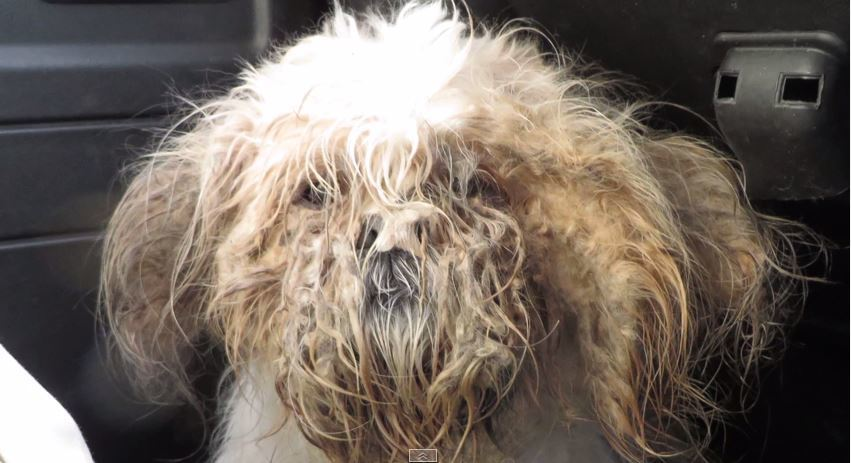 How Bentley the dog was found by rescuers