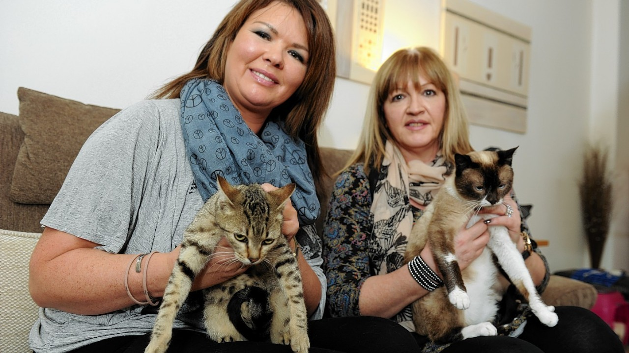 Helen Smith and Lynne Dickson were delighted to arrive home safely after driving the cats across five countries