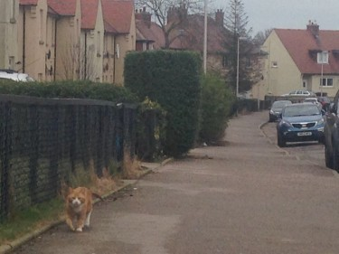 The family's other cat Star patrolled the streets looking for his friend