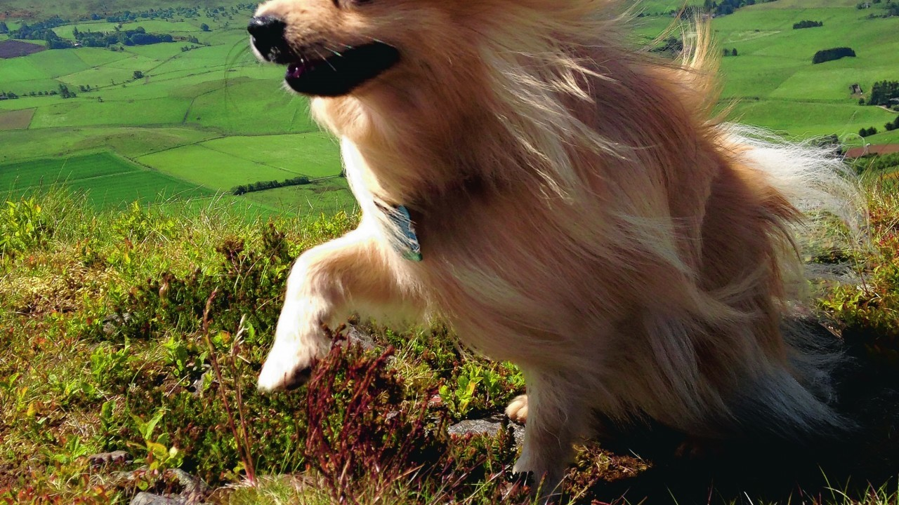 Meeko the Pomeranian lives with Melissa in Dyce.