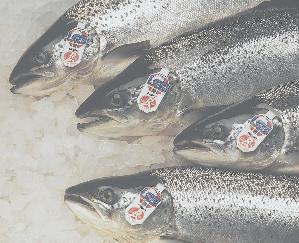 Label Rouge salmon