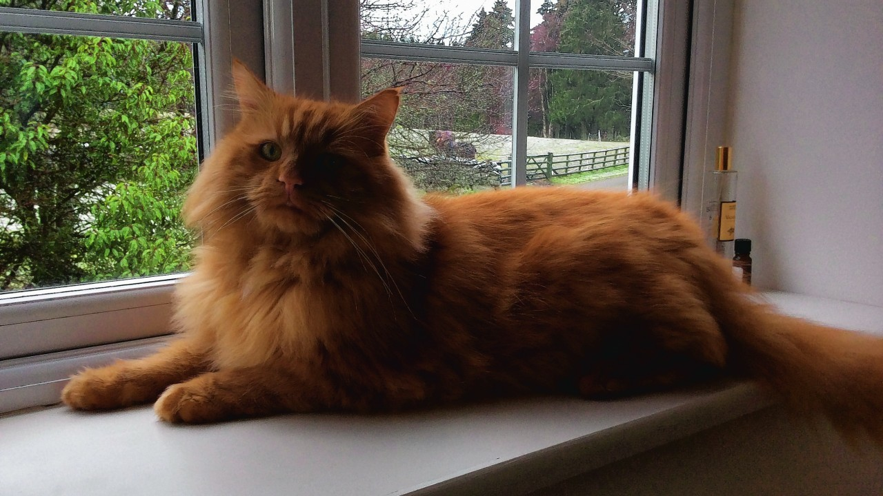 This is Henry who lives with Jackie Laver in Auchattie, Banchory. He is our canvas winner this week.