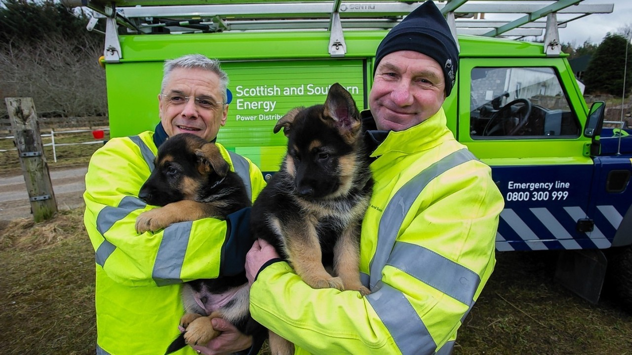 Bill Collie and Keith Hay with their namesake puppies