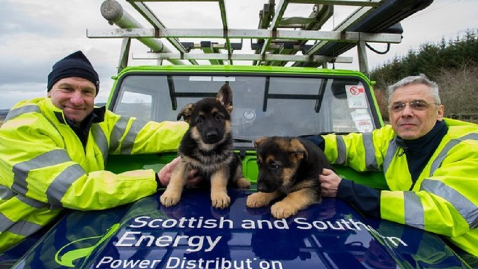 Bill Collie and Keith Hay with their namesake puppies (SSE/PA Wire)