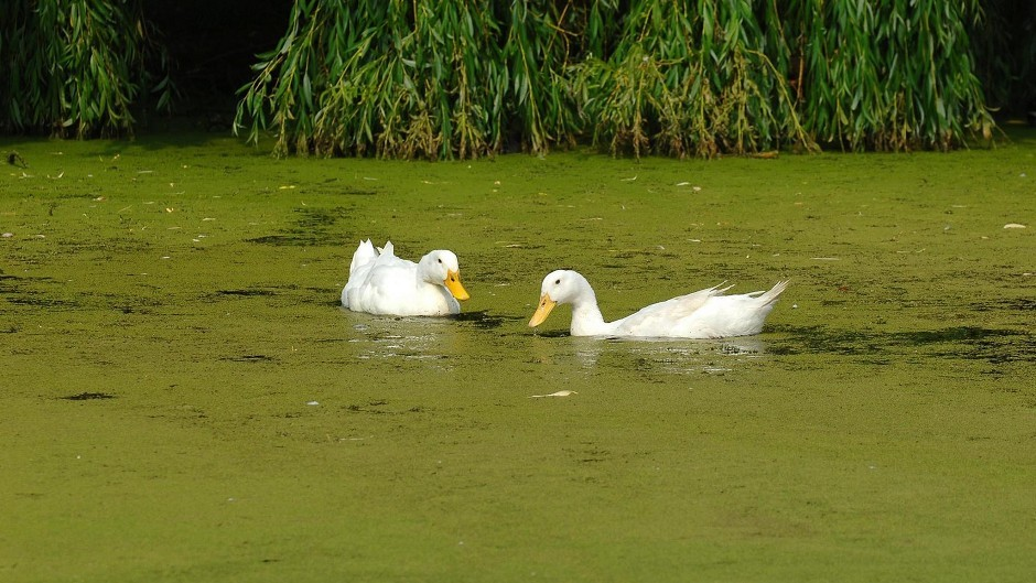 Warnings have been issued after blue green algae was found in Western Isles lochs