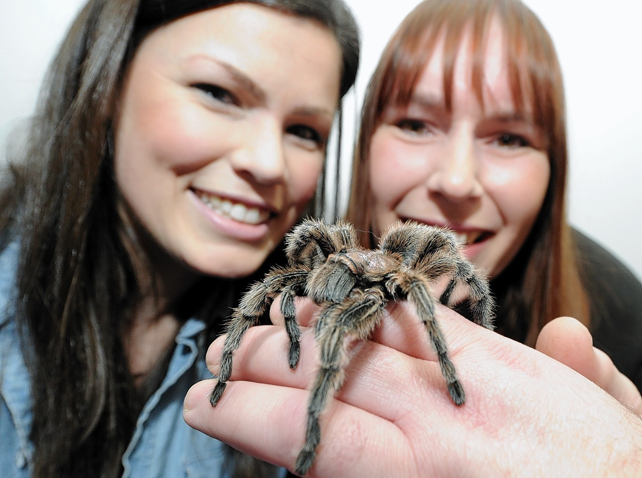 Jennifer Flynn and Emma Scott with a chile rose Tarantula.
