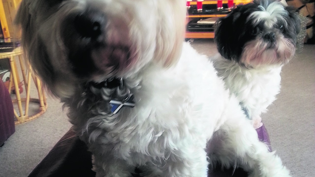 This is Candy and Druie who live with Margaret Fraser in Aviemore.