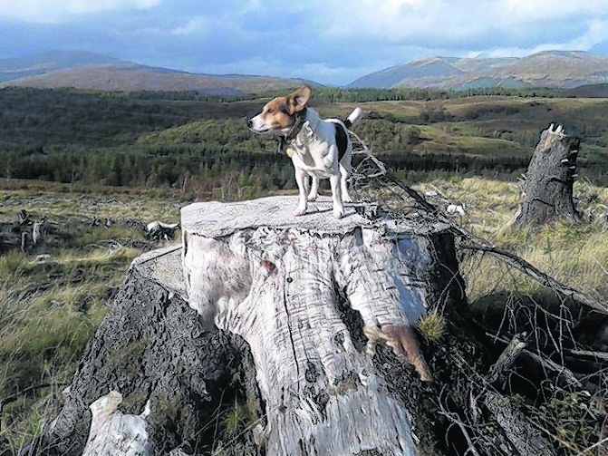This is Fraochen, he is looking out over Aonach Mor near Fort William. He lives in Arisaig with Anne and Hughie.