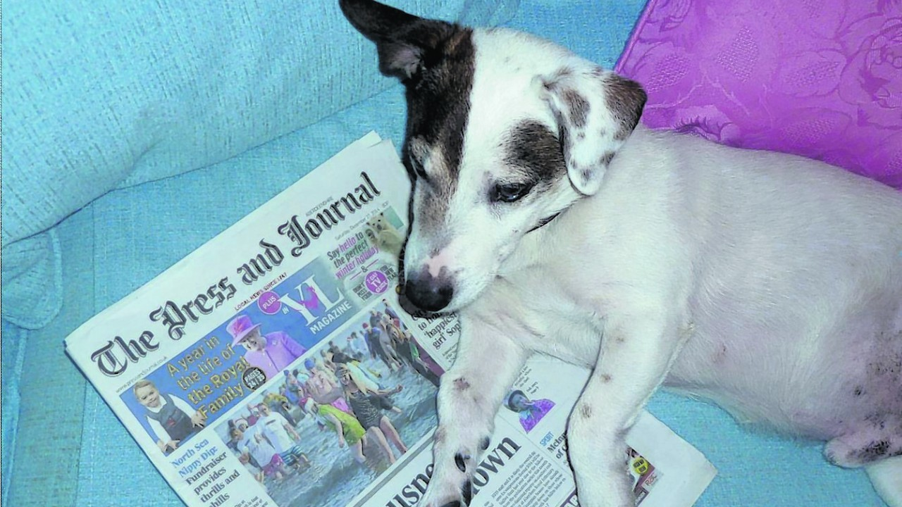 Here is Jake the Jack Russell reading the P&J. He lives with John and Janis in Tarland.