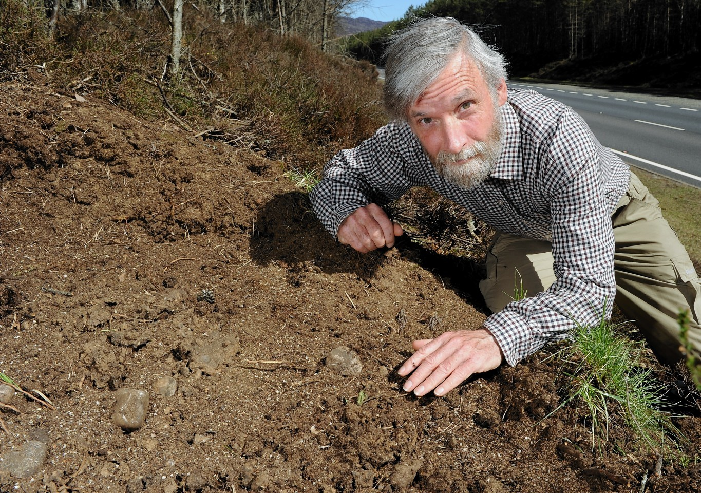 Gus Jones with an ant nest beside the A9 at Alvie