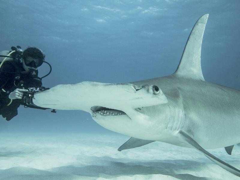 Dr Smith and a Hammerhead Shark