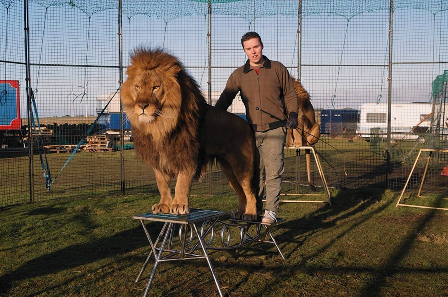 The only remaining lion tamer in Britain, Thomas Chipperfield, kept two lions and three tigers in cages on a croft in Fraserburgh