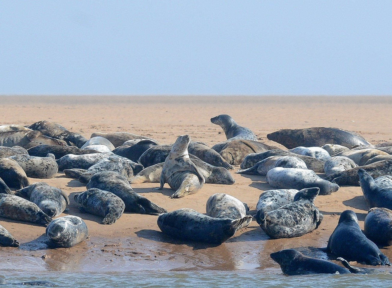 Seals' hearing could be damaged by the construction work