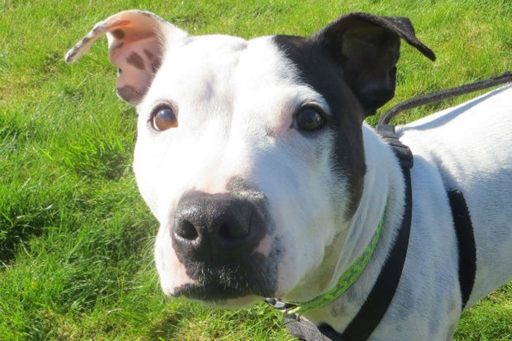 Tara is looking for a new home