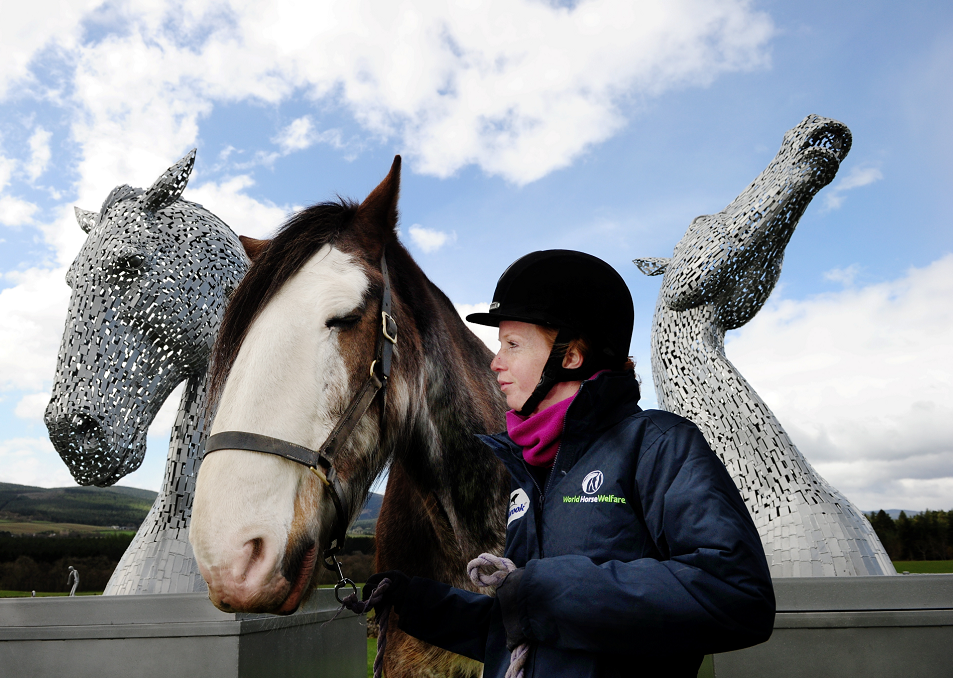 Jude Anderson with Digger the Clydesdale  and the kelpies