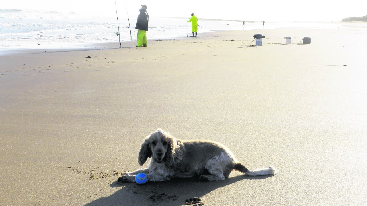 Barley lives with Janice Buchan in Peterhead and loves Scotstown beach.