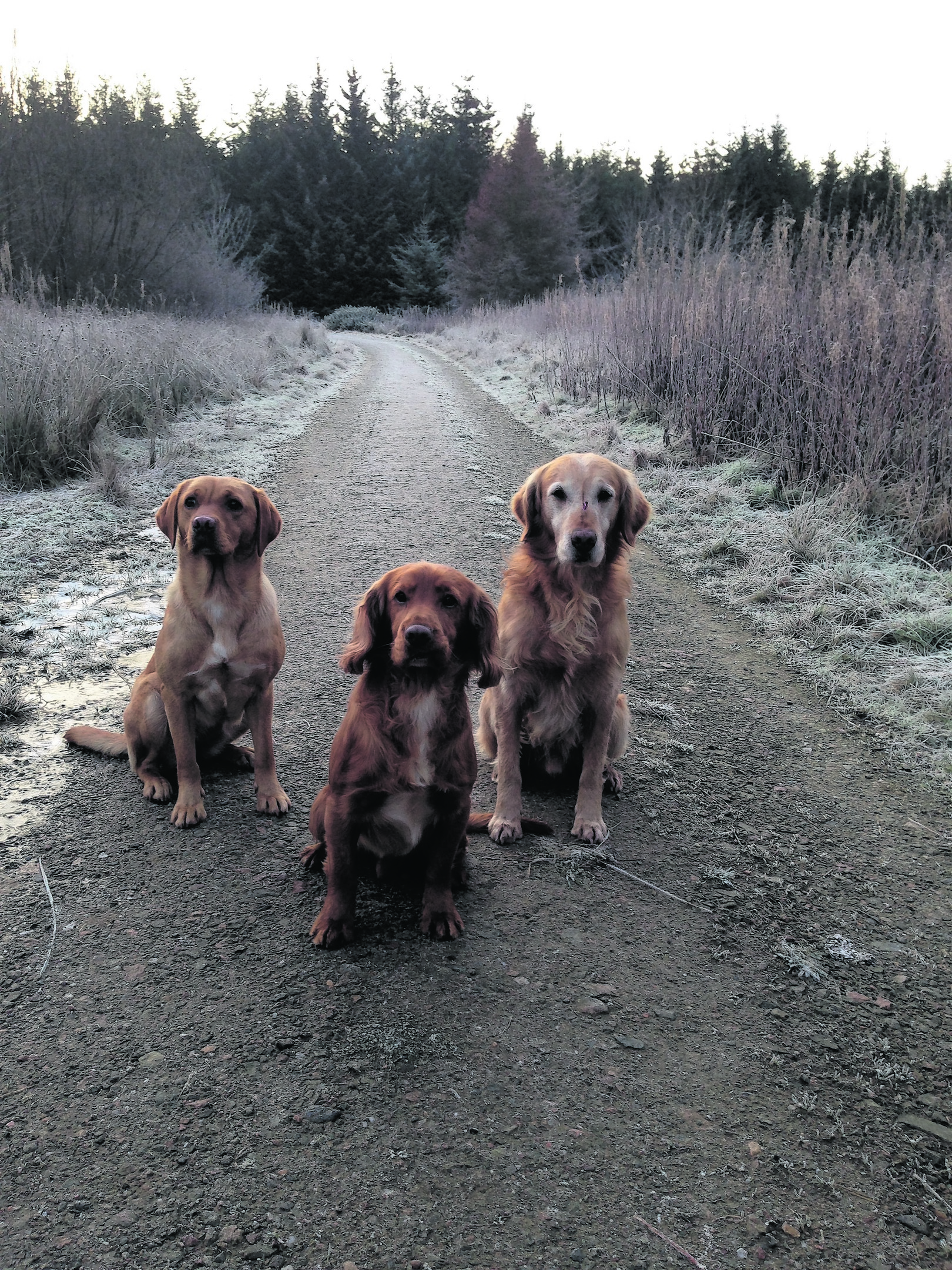 Casey, Oscar and Glen are owned by John and Jackie Bruce from Peterhead. These three are the canvas winners for this week.