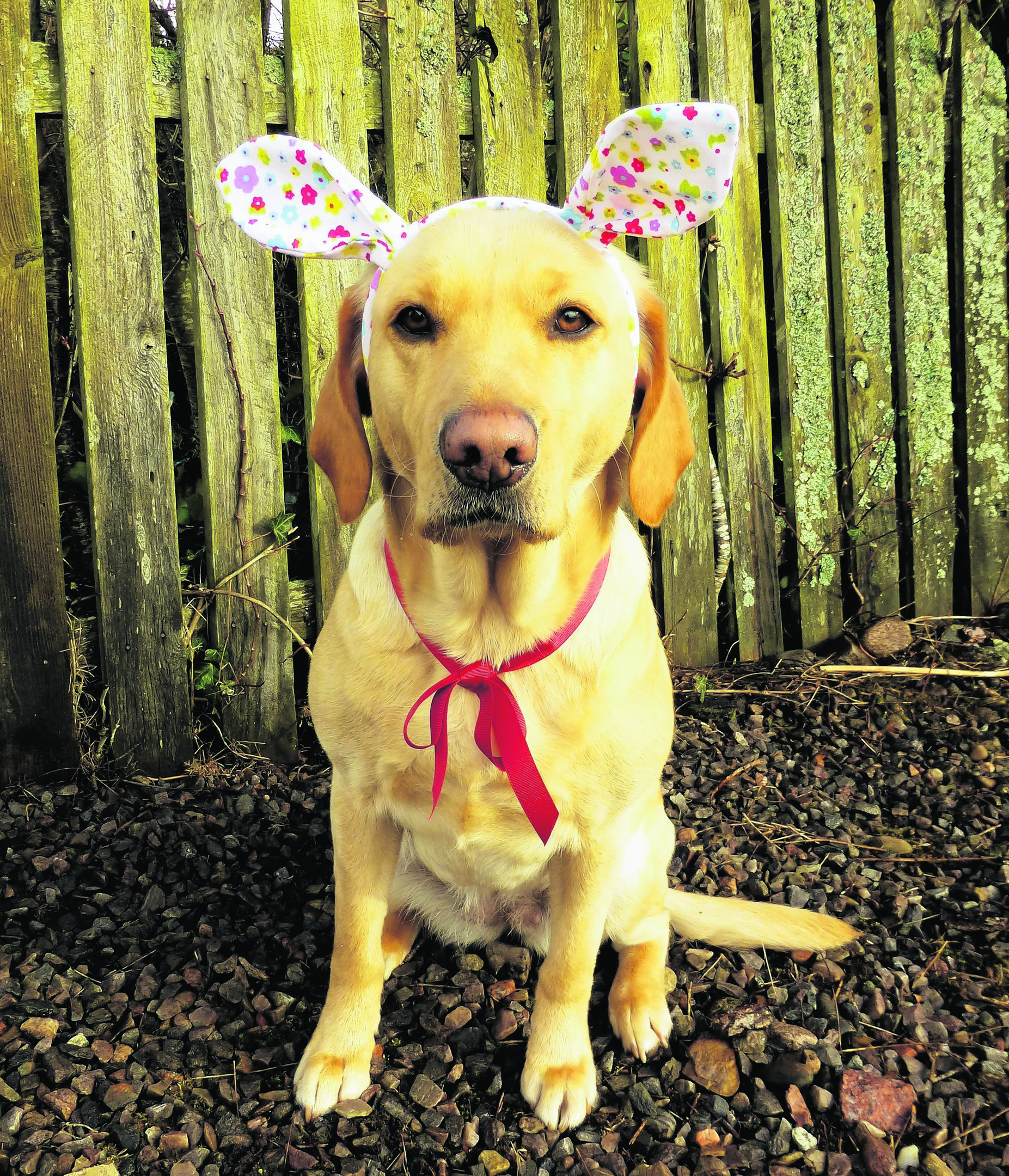 This is Sunny, all ready for Easter. She lives with Lisa Wood in Nairn.