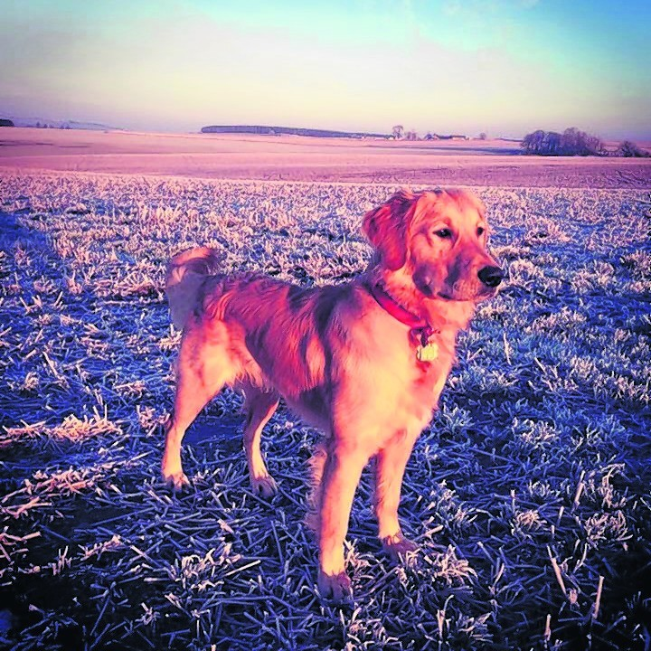 This is Denver who stays in Turriff with Emma Murphy and Kevin Reid.