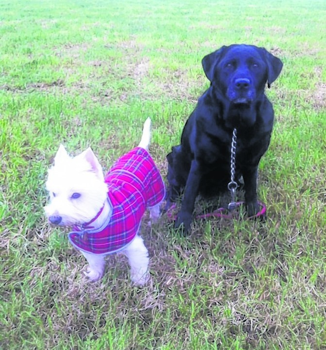 Frankee and Penny lives with Ian Abbott in Rafford, Forres.