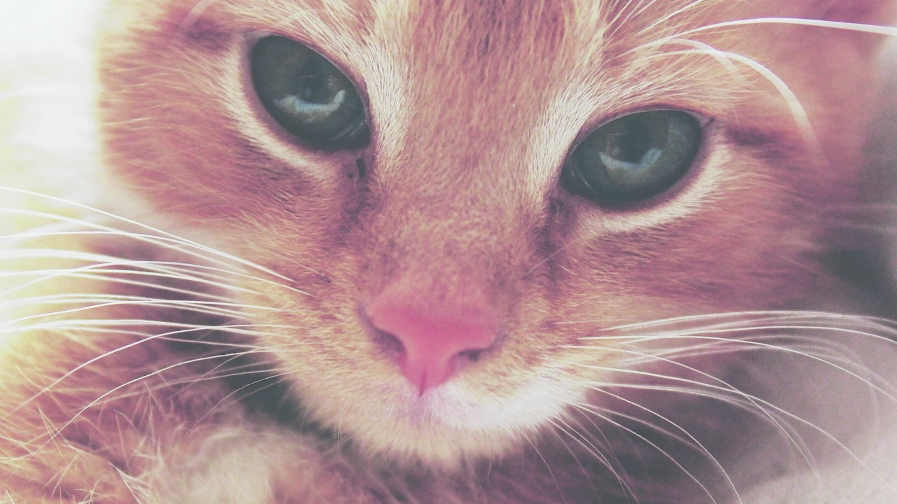 This gorgeous kitten is Harley who stays with the McNeill family in Buckie, Moray. Harley is our canvas winner this week.