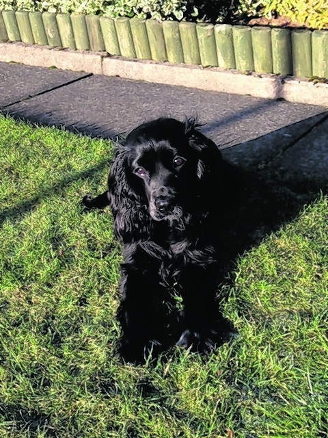 Millie lives with Vicki McIntosh in Oldmeldrum.