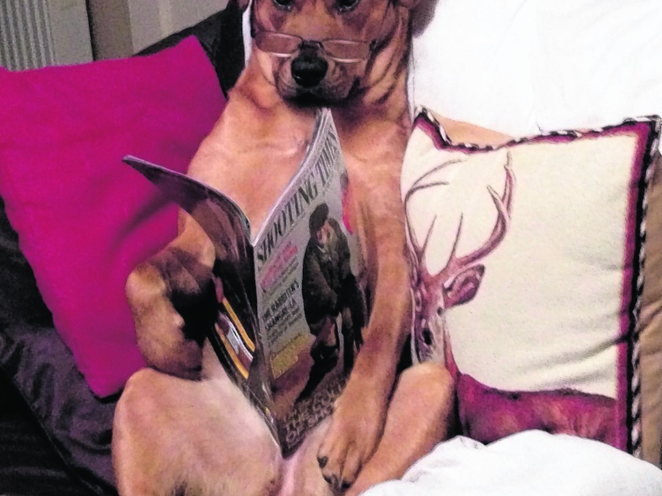 This is Mya reading the shooting times. She belongs to Chris and Jen who live in Scaniport, Inverness.
