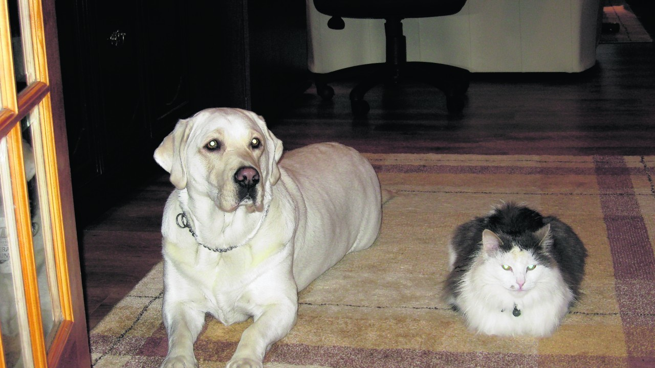 Trudy the Labrador and Dusty the cat live with Jackie and Valerie Forbes in Wick.