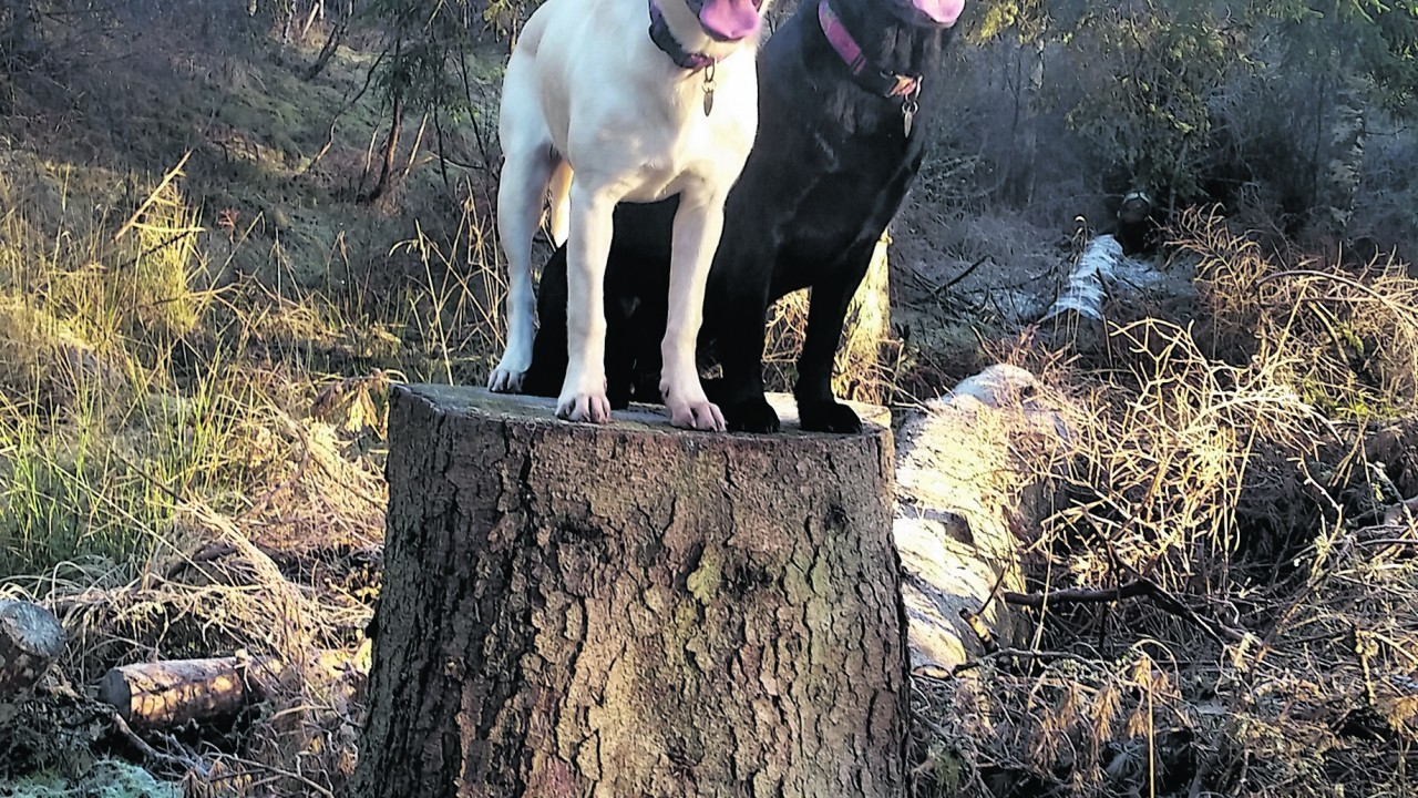 Neave and Skye live in Lumphanan, Aberdeenshire, with the Kerr family.