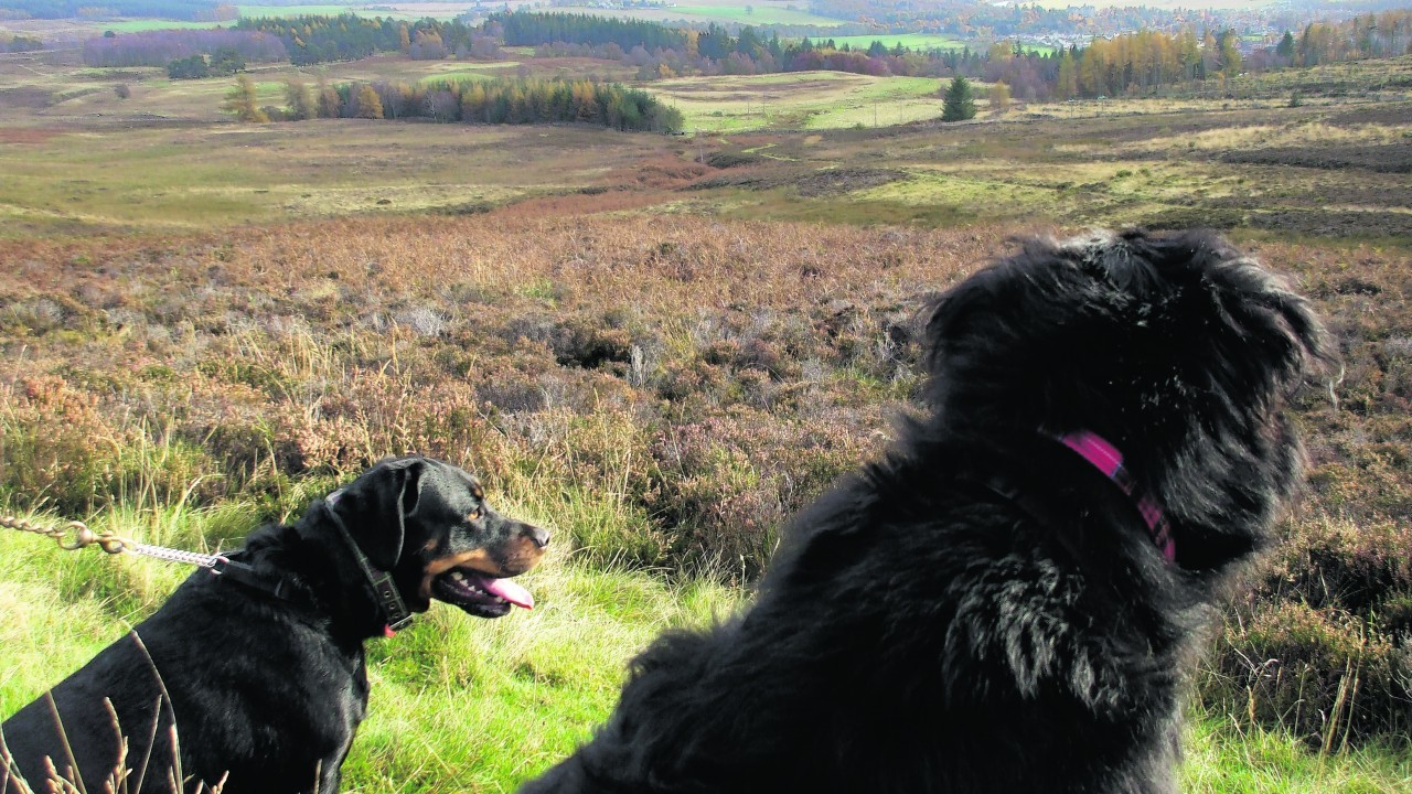Rescue dogs Tess and Bill live with the Kent family in Ballinluig, Pitlochry.