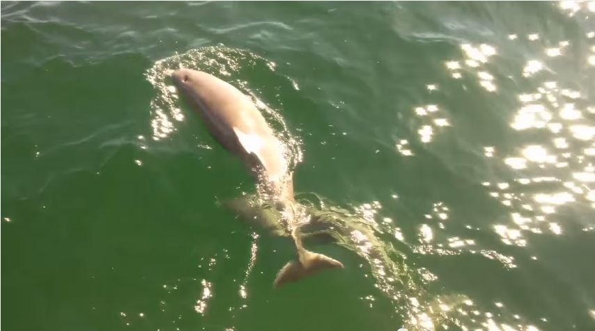 The beautiful dolphins