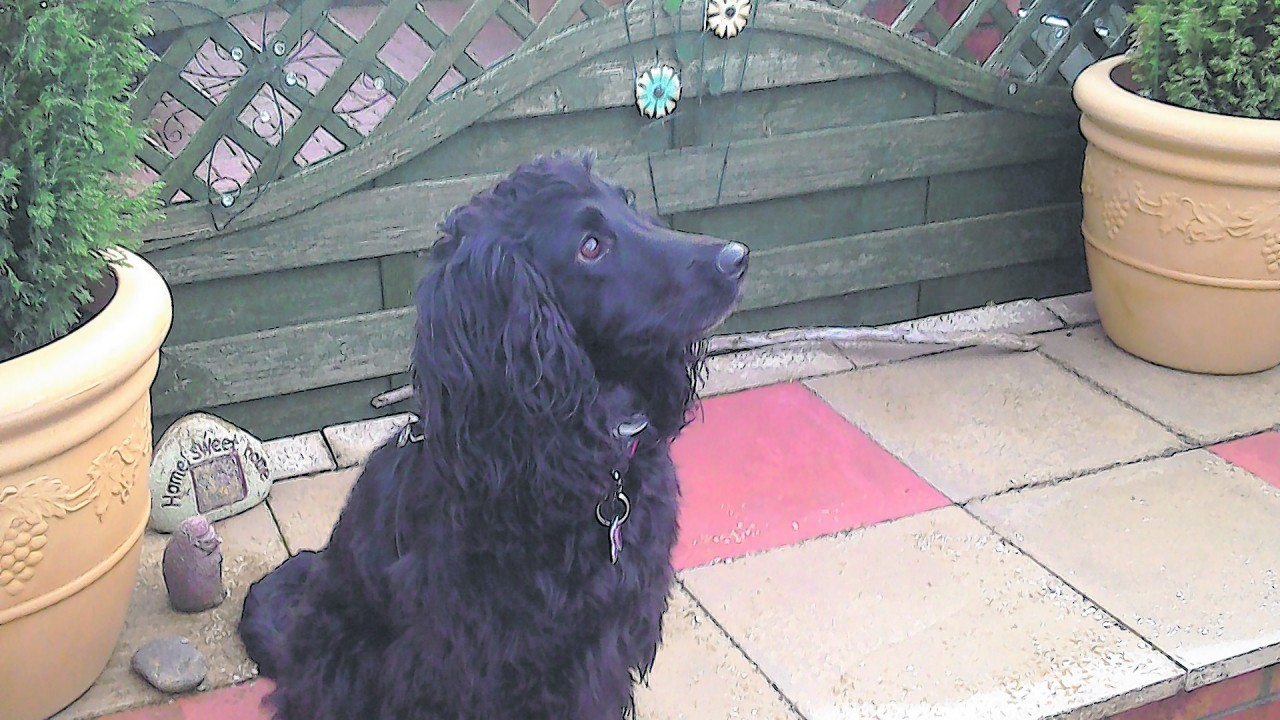 Archie lives with Allan and Jenny Ewing in Nairn.
