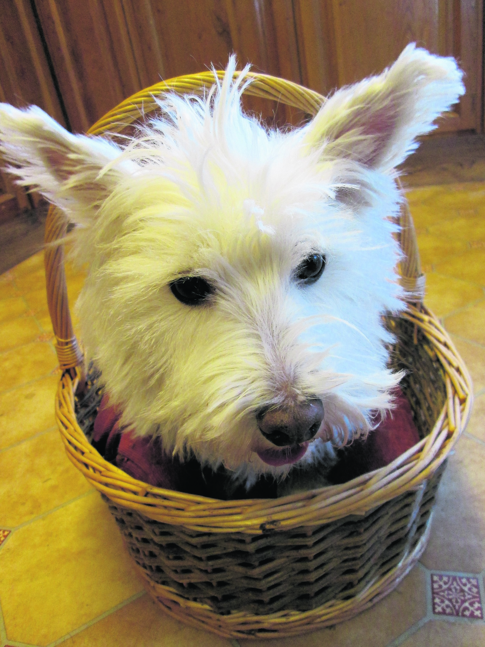 Poppy lives with Fiona Mclean in Brora