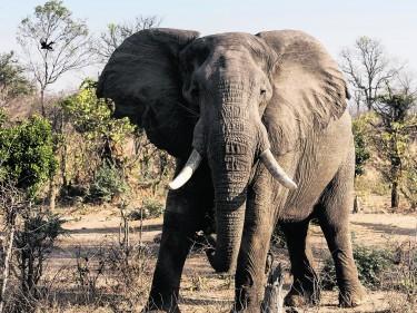 TRAVEL Zimbabwe 092711