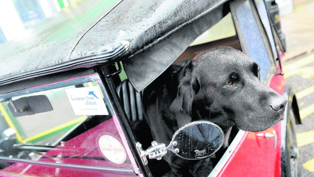 'Angus' the black labrador stands guard over his masters, Mike Taitt of Glass, 1932 Austin 7.