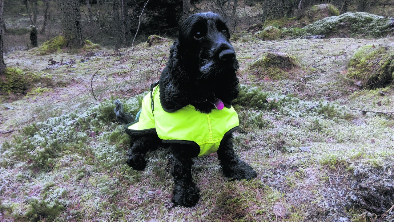 Here is spaniel Freya on one of her favourite walks at Crathes. She  lives with her staff Gill and Donald Guthrie at Westhill, with Michaela Guthrie as an occasional guest