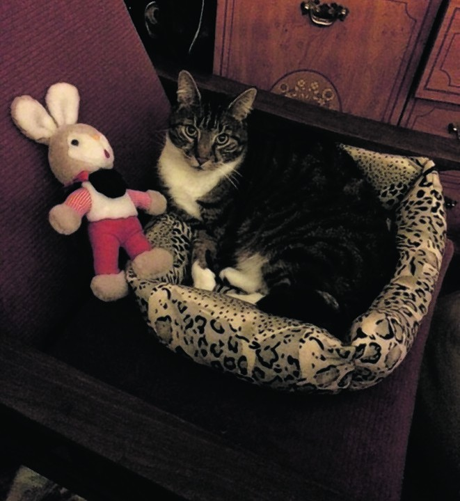 Purdy the cat lives with Janice in Aberdeen