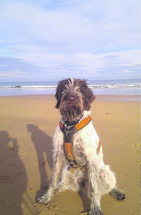 Seb loves the beach, playing football and chasing the cat. Seb lives with Wull and Anne in Inverugie.
