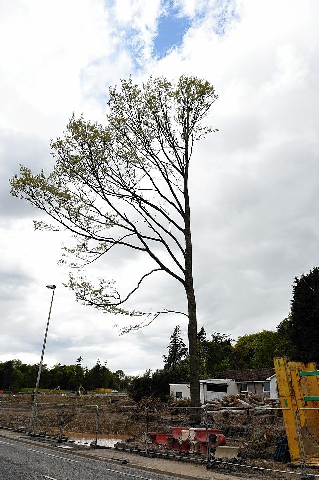 A bird's nest has hampered tree-felling work on the AWPR